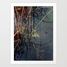 Salisbury Waters Art Print