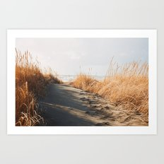 Trail to the beach Art Print