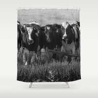 cows Shower Curtains featuring Cows by Julie Luke