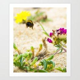 the flight of bumble bee on the bunes Art Print