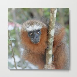Cute Monkey Metal Print