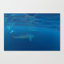 Chasing giants (diver and 2 whale sharks) Canvas Print