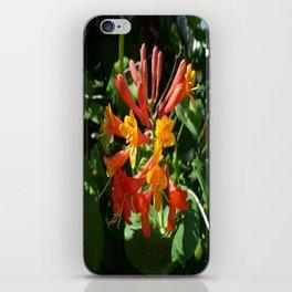 Orange Flowers of Woodbine HoneySuckle iPhone Skin