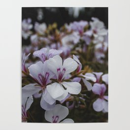 Flowers from the Castle Gardens Poster