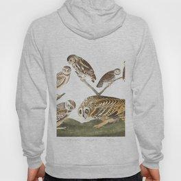 Burrowing owl, Birds of America, Audubon Plate 432 Hoody
