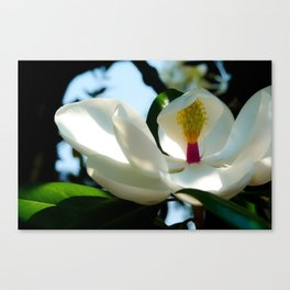 sunbath Canvas Print