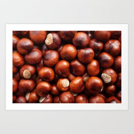 Shiny red-brown conkers in fall Art Print