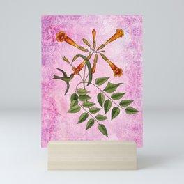 Hummingbird with Trumpet Vine, Vintage Natural History Collage Mini Art Print