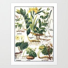Floral  for Home Decor Art Print