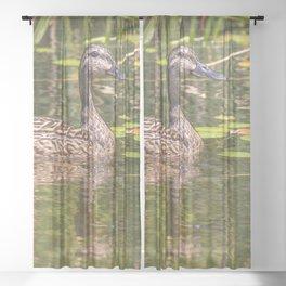 Quacker Sheer Curtain