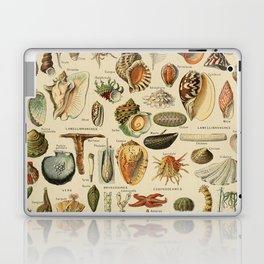 Vintage sealife and seashell illustration Laptop & iPad Skin