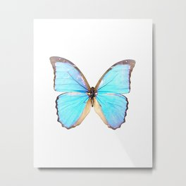 Morpho DiDius Butterfly Metal Print