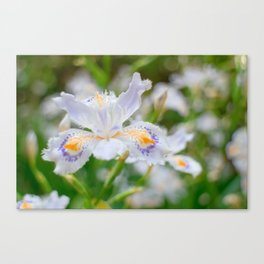 Fringed iris Canvas Print