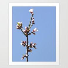 Blossom Branch Art Print