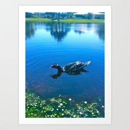 Duck SWIMMIN  Art Print