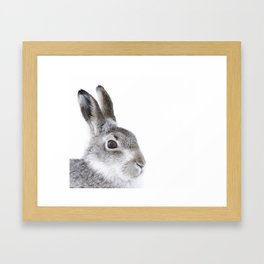 Curious hare Framed Art Print
