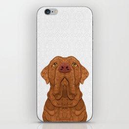 Bordeaux Mastiff iPhone Skin