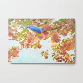 Indigo Bluebird on Pink Flowering Tree Branch Metal Print