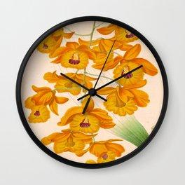 Dendrobium fimbriatum Vintage Botanical Floral Flower Plant Scientific Illustration Wall Clock