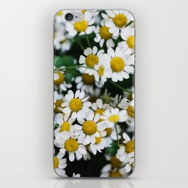 Camomile Wild Flowers iPhone Skin