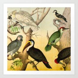 6 Birds Art Print