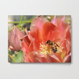 Prickly Pear Cactus Blossom with Visitor Metal Print