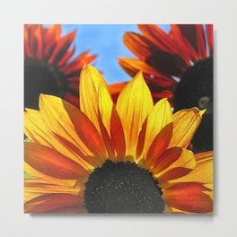 Sunflowers in Backlight Metal Print