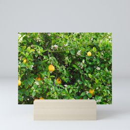 Meyer Lemon Tree Top Mini Art Print