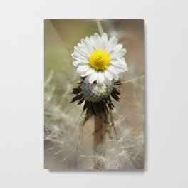 Dandelion Daisy Metal Print