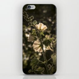 Sunlit beauty iPhone Skin