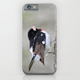 A Touch of Class: Rose-Breasted Grosbeak iPhone Case
