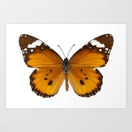 """Butterfly species danaus chrysippus """"plain tiger"""" Art Print"""