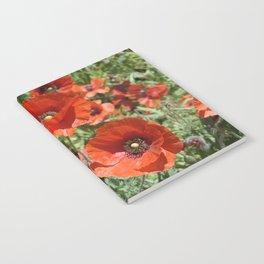 Poppy Trio Notebook