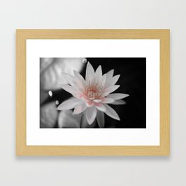 waterlily #1 Framed Art Print