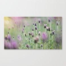 lavender summer Canvas Print