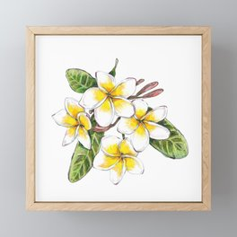 Frangipani Flower Framed Mini Art Print