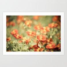 Field of Orange Art Print