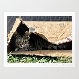 Sad Box Kitty (Lanai Cat's Sanctuary) Art Print