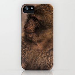 Barbary macaque iPhone Case