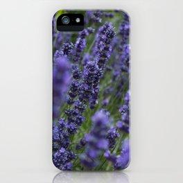 Lavender field iPhone Case