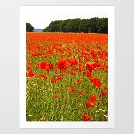 Sea of Normandy Poppies Art Print