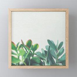 Crassula Group Framed Mini Art Print