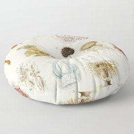 Adolphe Millot - Mollusques 02 - French vintage zoology illustration Floor Pillow