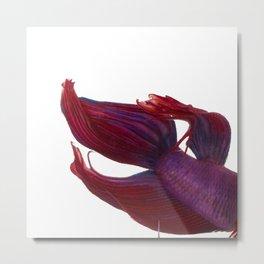 Betta Mermaid Metal Print