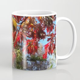Sunshine Through the Acer Leaves Coffee Mug