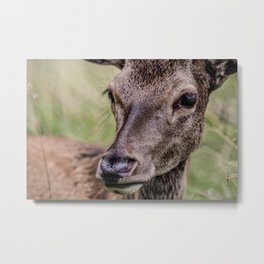 Gaze Of A Young Hart Metal Print