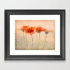 Orange Gerberas Framed Art Print