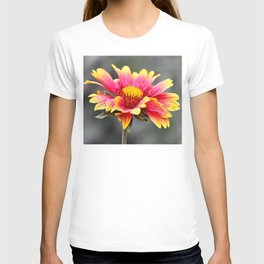 Sun in Bloom T-shirt