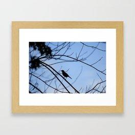 Bird   Cincinnati, OH Framed Art Print