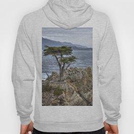 A Cypress Tree Hoody